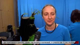 У Львівській обласній бібліотеці презентували виставу про неслухняне жабеня