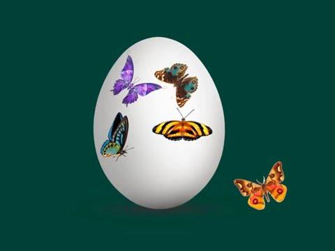 Дидактическая игра Украшаем яйцо (перемещение объектов)
