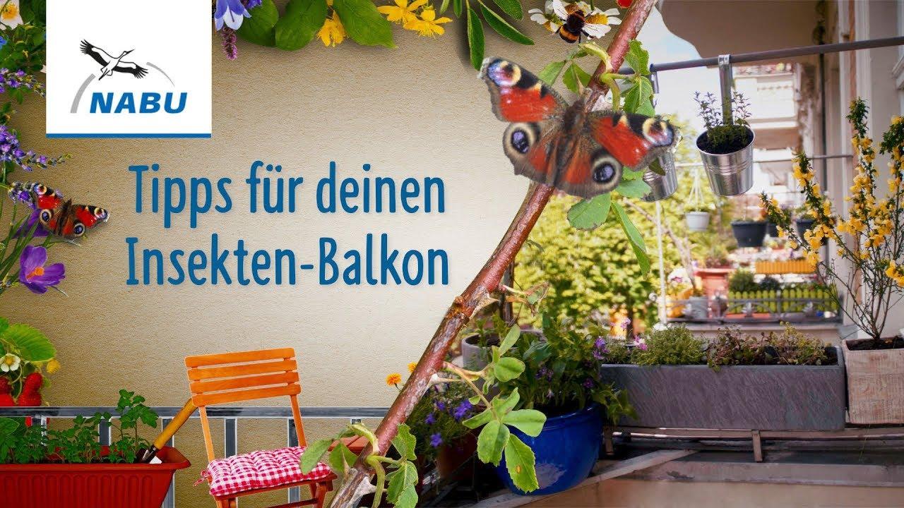 Insect Aid   Das darf nicht fehlen auf deinem Insekten Balkon