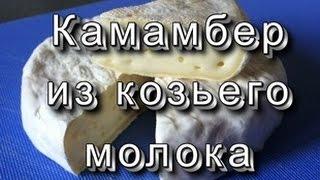 Плотный Камамбер/ Goat Camembert