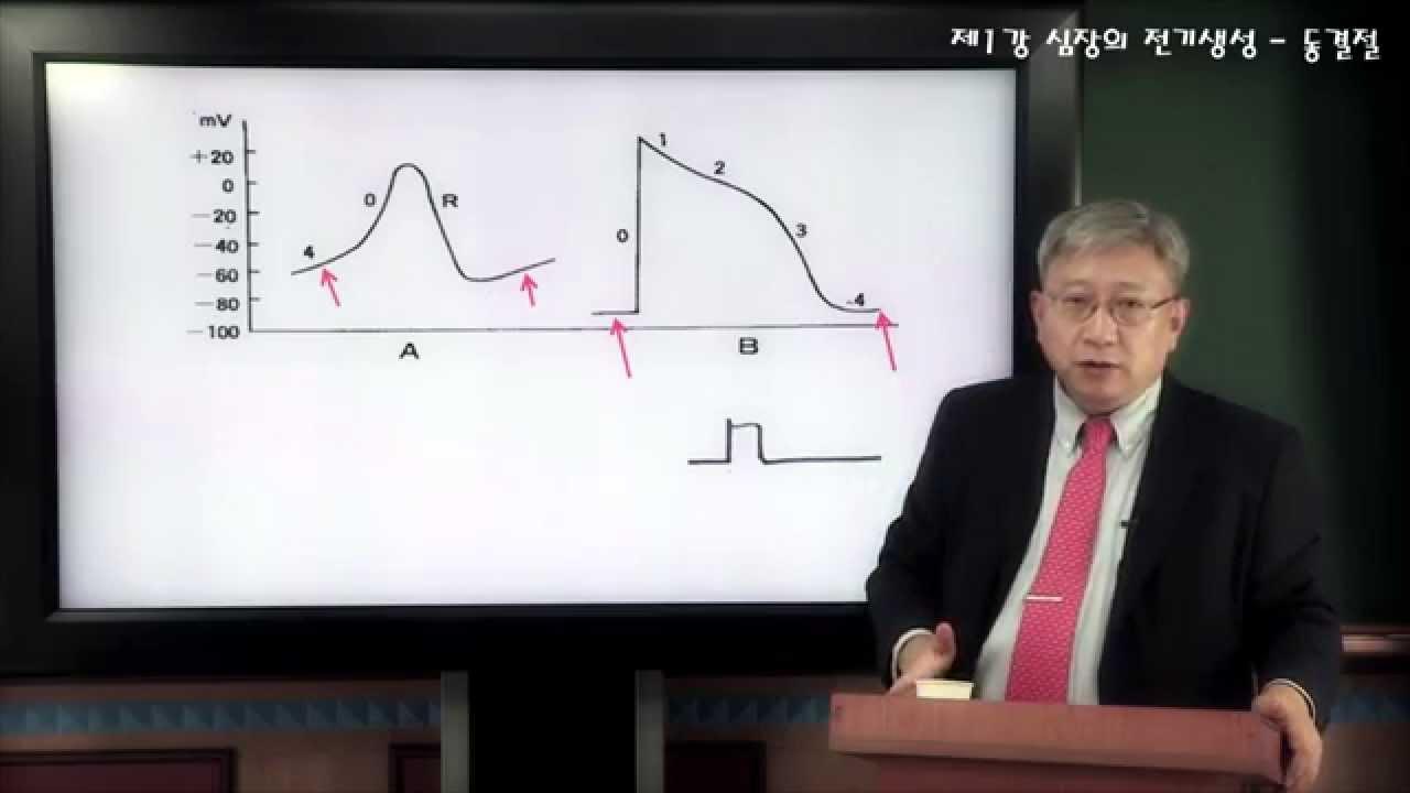 """노태호교수의 '알기 쉬운 심전도' 1강 """"심장의 전기생성 - 동결절"""" Prof. Rho's Easy ECG #1 Sinus Node 1"""