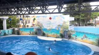 Дельфинарий в парке