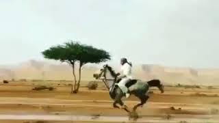متعوا انظاركم ،، الصمت في حرم الجمال جمالُ الحصان العربي