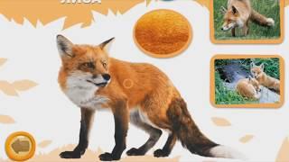 Звуки животных. Голоса животных. Как говорят животные