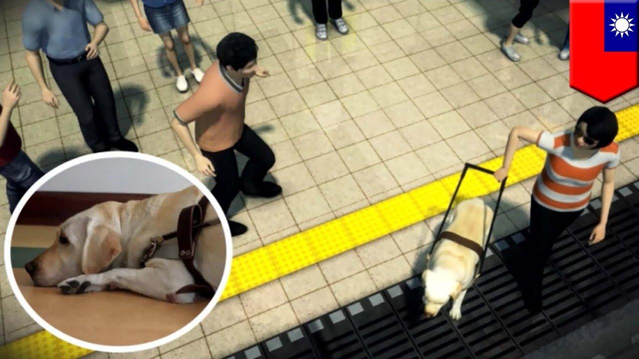 乗客が盲導犬驚かせ 障害者女性が線路に転落 Youtube