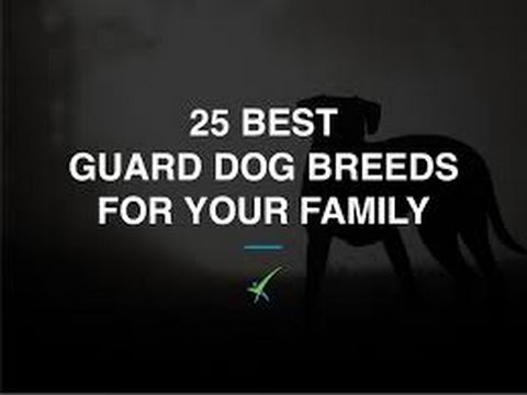 The 35 Most Protective Dog Breeds