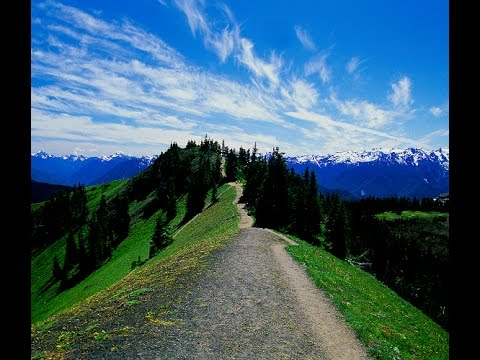 Hurricane Ridge - Olympic National Forest  - June 2015