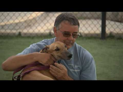 San Diego Homing - Greyhound Adoption Center