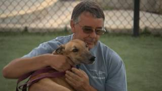 San Diego Homing - Greyhound Adoption Center