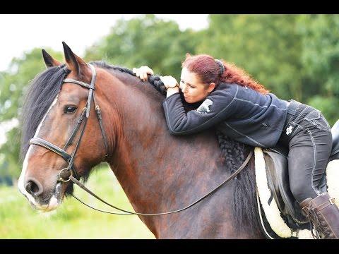 Bild: Pferdehaltung bei APASSIONATA: - Leben im Pferdestall