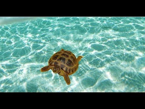 Вопрос: Как купать черепаху?