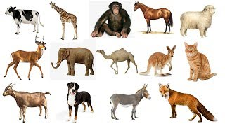 Learn Animals Names with Spelling for Kids / Children | Learn Spelling of Animal