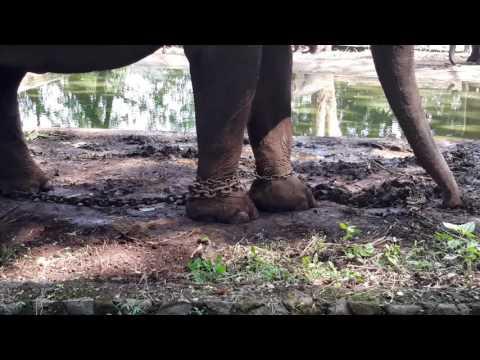 The animal nightmare that is Bandung Zoo, Indonesia