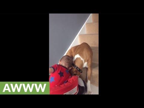 Baby and dog hug and share kisses