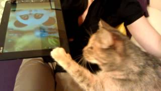 Кошка питается планшетами