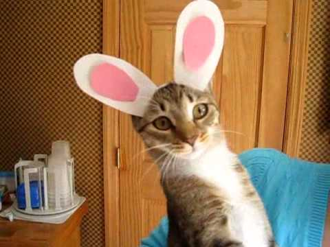 Cat Wearing Bunny Hat Cute