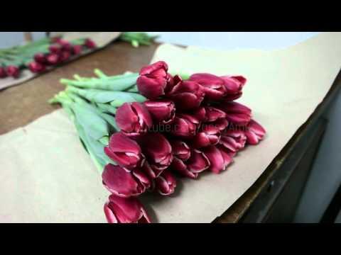 ТЮЛЬПАНЫ СРЕЗКА И ХРАНЕНИЕ. Болезни тюльпанов, топпинг. Выгонка тюльпанов - последний этап.