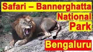 Wildlife Safari | Bannerghatta National Park | Bangalore | Karnataka