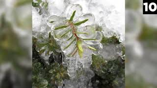 Top 15 Mysterious Things Found Frozen In Ice