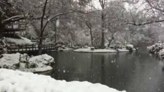 Fort Worth Texas Botanic Japanese Garden Snow Winter Flakes Storm Lake Tea House Arch Bridge Trees