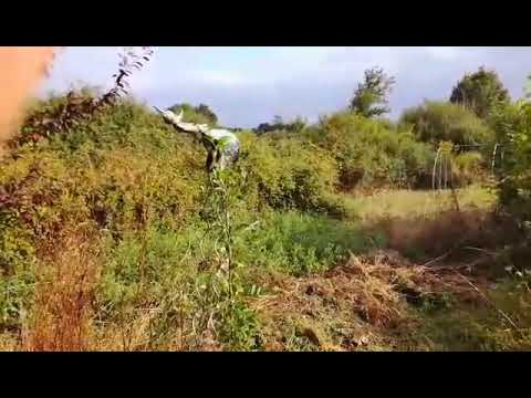 Les bienfaits de la haie au jardin jardin bio facile for Jardin youtube