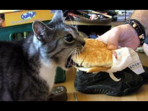 Cats Saying 'Nom Nom Nom' While Eating Compilation (2013)