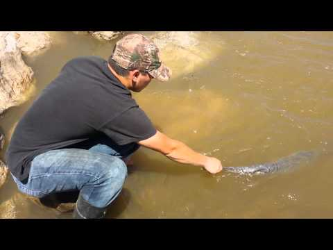 Dinosaur Fish Released Into The Ohio River