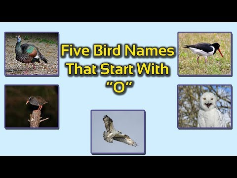 Five Bird Names That Start With