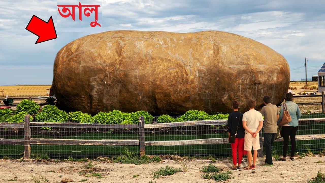 এত বড় ফল ও সবজি আপনি জীবনে কখনো দেখেননি   14 Biggest Fruits and Vegetables in the World in Bangla