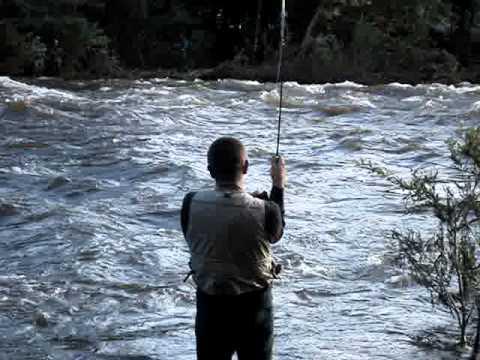 Huge king salmon pulaski ny youtube for Pulaski salmon fishing