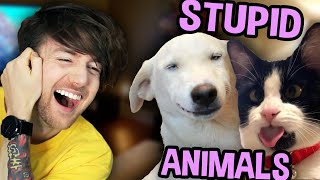 ANIMALS BEING STUPID FOR 17 MINUTES STRAIGHT
