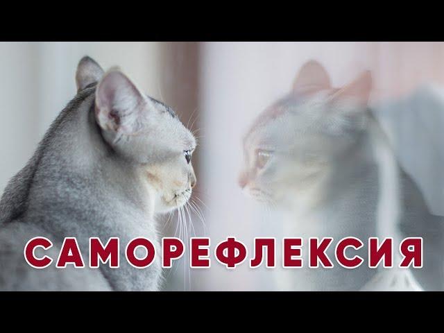 Что такое Саморефлексия? | Ольга Евланова
