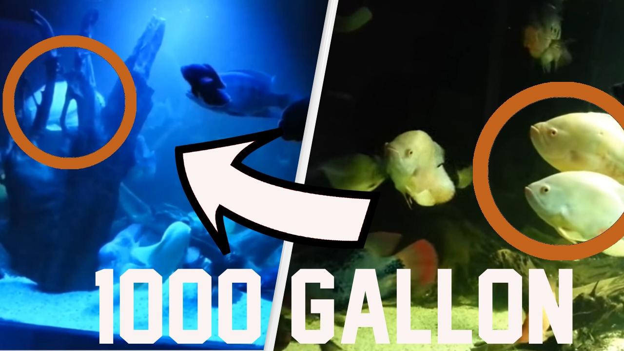 1000 gallon 4000 liter monster fish tank at home with sharks oscars plecos monster fish. Black Bedroom Furniture Sets. Home Design Ideas