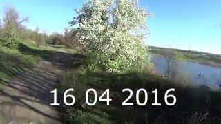 Карась весной на поплавчанку, закрытие навигации перед запретом 2016(Весенний карась с берега на поплавчанку! Рыбалка вертушкой поклевка амур белый виброхвост апреле..., 2016-04-17T15:53:34.000Z)