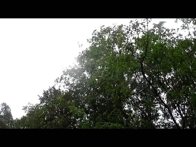 Блесна DAM на дереве