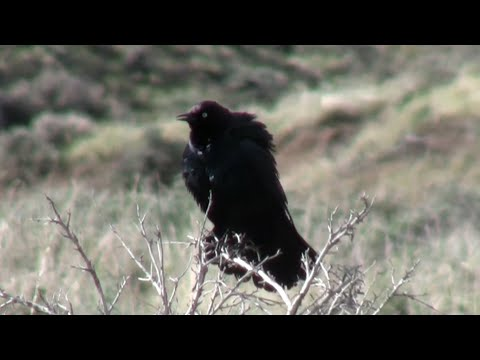 Birds, Aves, Ornithology, Animals, Fauna Part 1 of 24 - Nature Ecosystem of Western N America