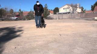 Using an Extended hand to train your dog | Sit Means Sit