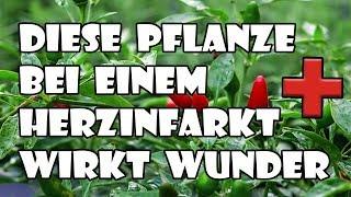 Diese Pflanze wirkt Wunder bei einem Herzinfarkt