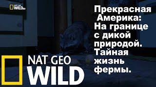 Nat Geo Wild Прекрасная Америка На границе с дикой природой. Тайная жизнь фермы.