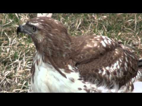 Hawk.MTS