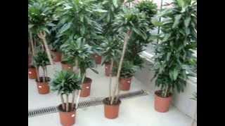 видео купить комнатные растения Киев