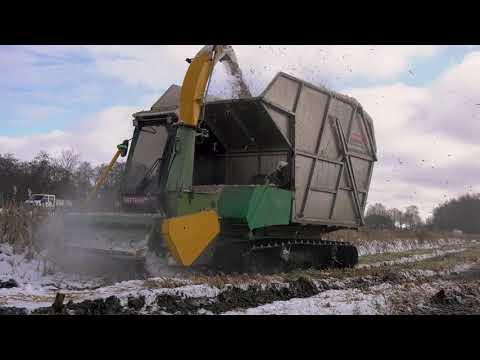 Lisdodde oogst Ankeveen