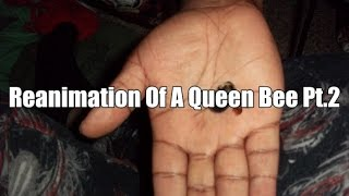 Reanimation of dead Queen Bee pt.2 complete animation