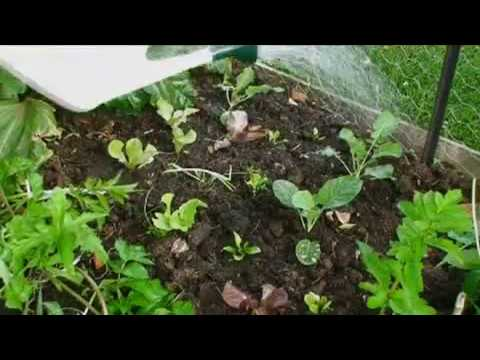 *NEW! The Secret to the Easiest Way to Grow Fresh Organic Vegetables in your Veggie Garden