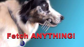 How To Teach Your Dog To Fetch Absolutely Anything! Dog Training
