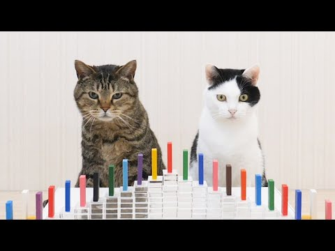 Cats and Domino