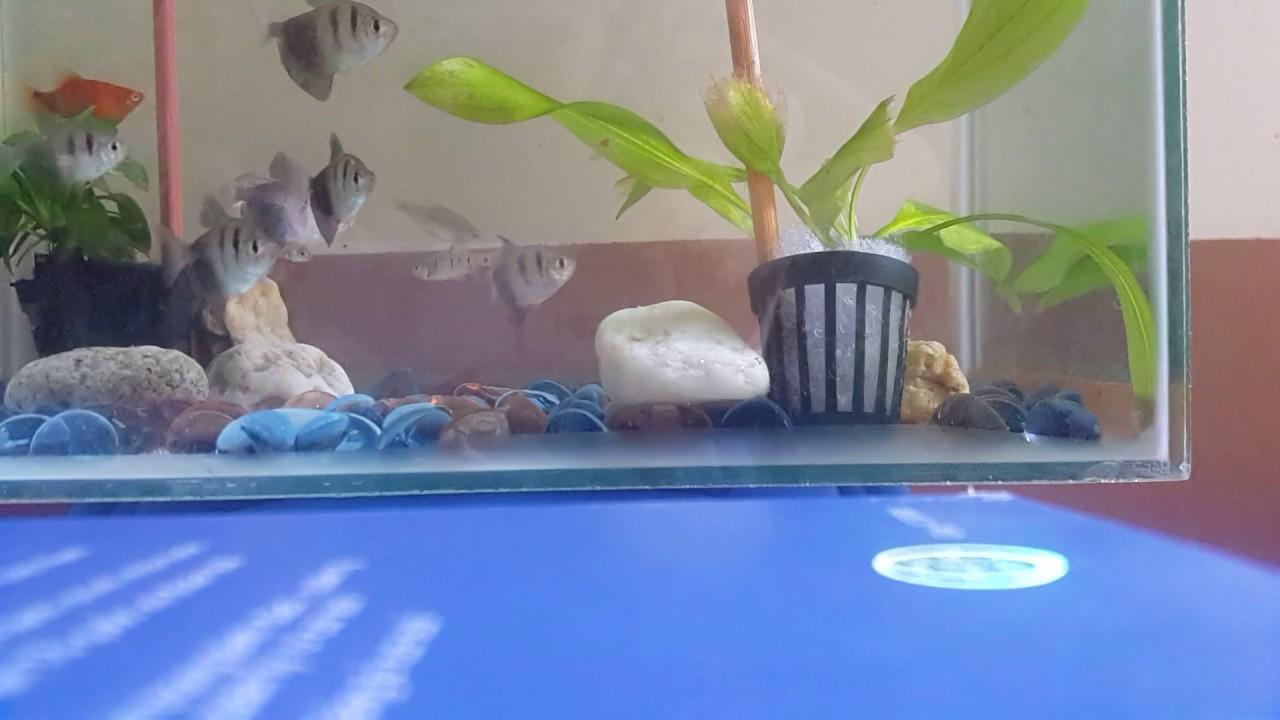 Bể cá có thêm cây thủy sinh tạo môi trường xanh, mấy chú cá cứ gọi là tung tăng thích.