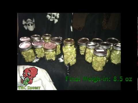 How to Grow Hydro Weed in 16 Weeks