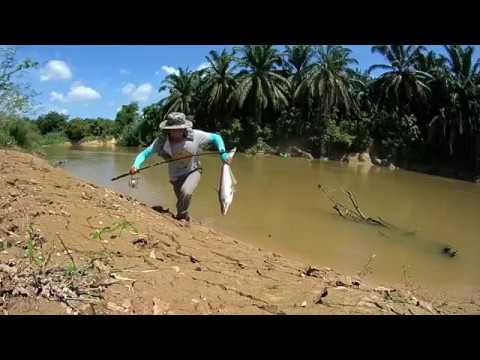 Memancing Ikan Patin Sungai Selangor