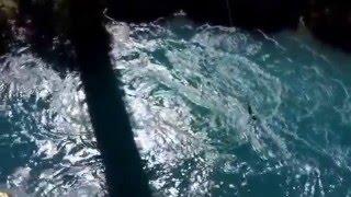Bungee jumping. Девушка прыгает с моста в местечке Kawarua river Central Otago in New Zealand